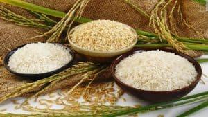 Kế hoạch và kinh nghiệm kinh doanh buôn bán gạo lẻ online lãi lớn